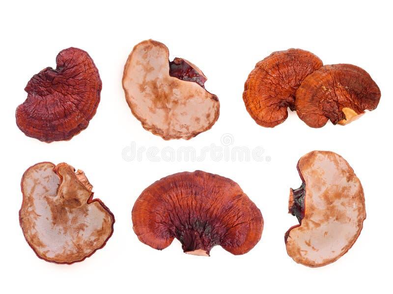 在白色隔绝的设置干lingzhi蘑菇 免版税库存图片