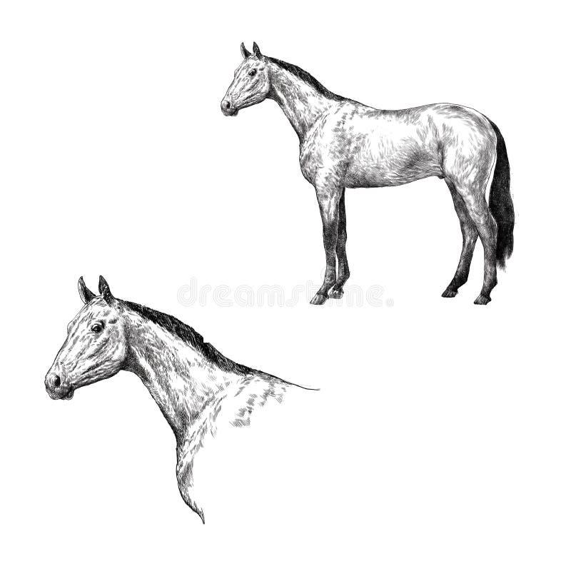 在白色隔绝的逗人喜爱的典雅的马 向量例证