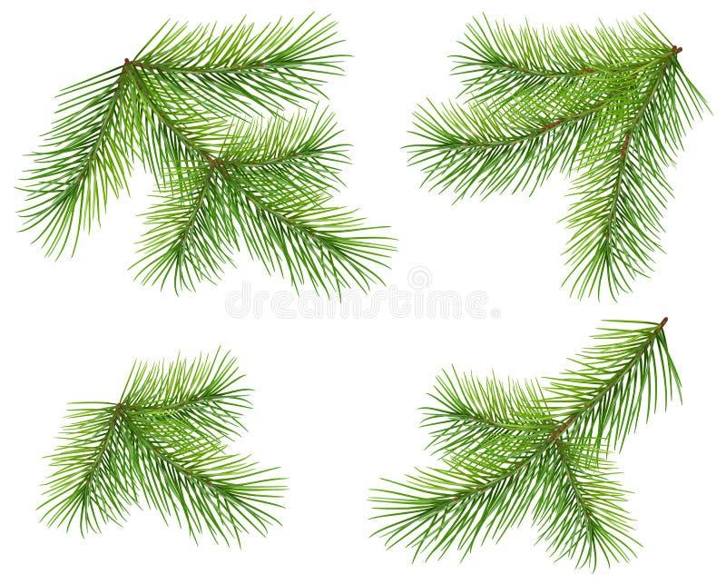 在白色隔绝的集合绿色杉木分支 豪华的蓬松冷杉圣诞树枝杈 皇族释放例证