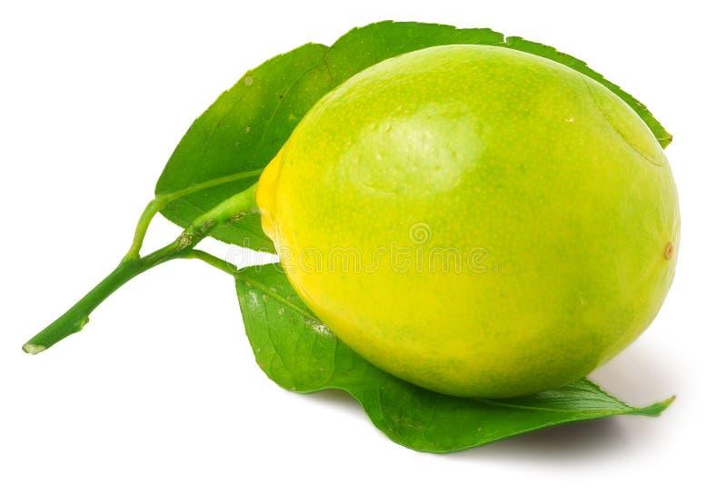在白色隔绝的一个柠檬 库存图片