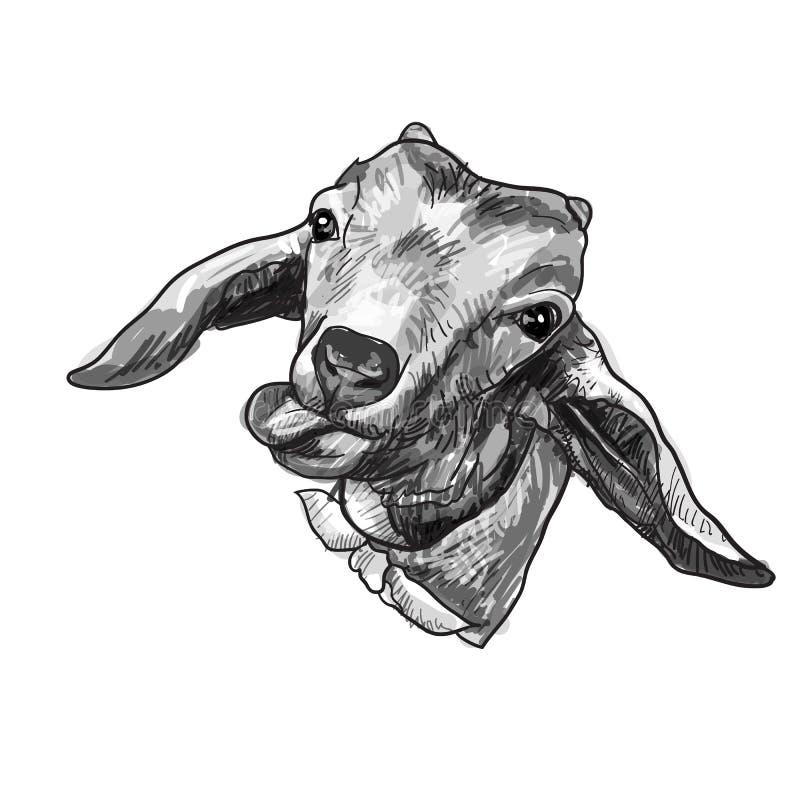 在白色隔绝的图画山羊顶头黏附的舌头 库存例证