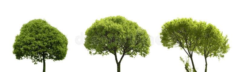 在白色隔绝的套色的剪影树 向量例证