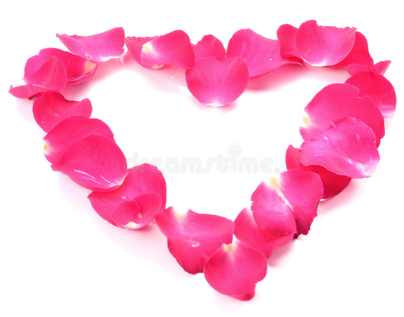 在白色隔绝的桃红色玫瑰花瓣的美好的心脏 免版税库存图片