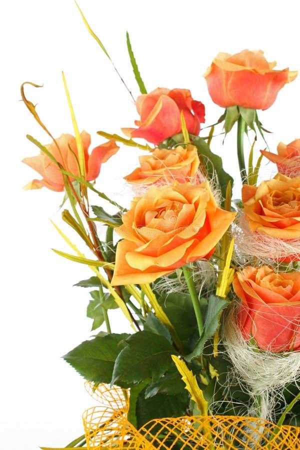 在白色隔绝的桔子玫瑰 库存图片