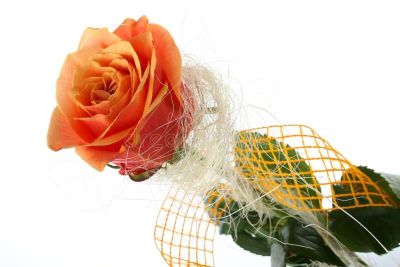 在白色隔绝的桔子玫瑰 图库摄影