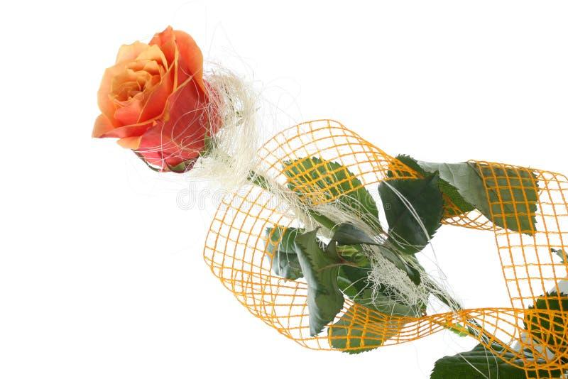 在白色隔绝的桔子玫瑰 库存照片