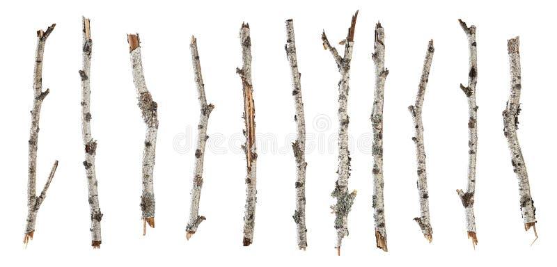 在白色隔绝的汇集干燥分支桦树 免版税库存照片