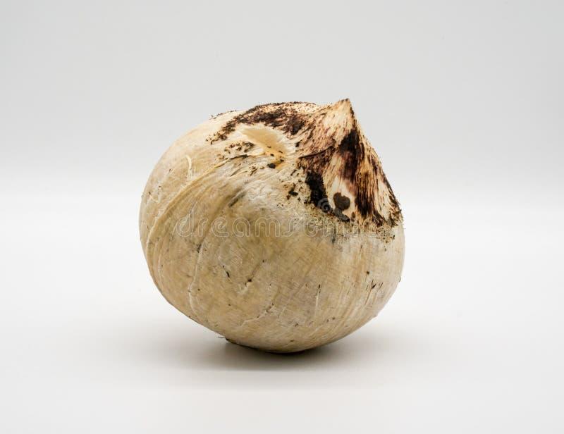 在白色隔绝的烤椰子 免版税库存图片