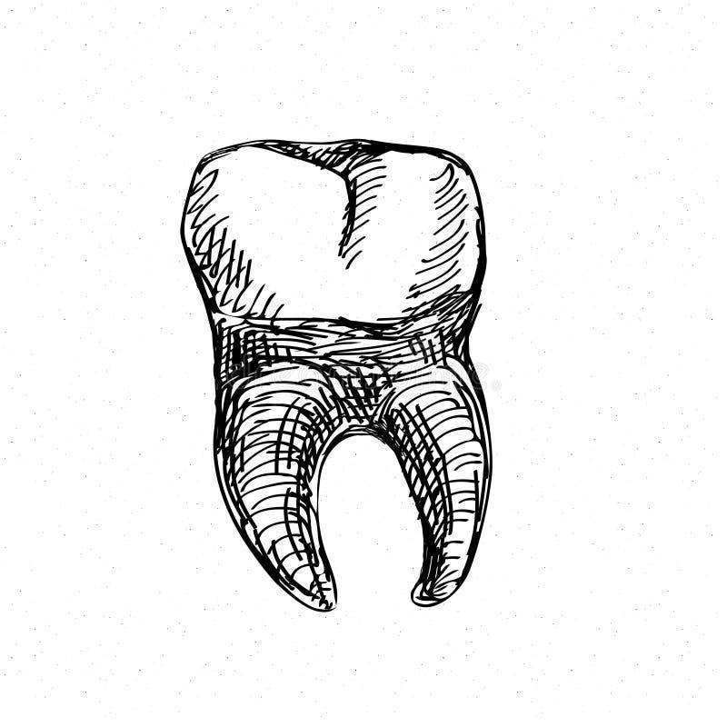 在白色隔绝的牙象 手图画剪影传染媒介例证 皇族释放例证