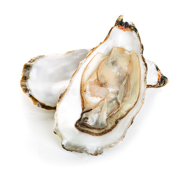 在白色隔绝的牡蛎 库存照片