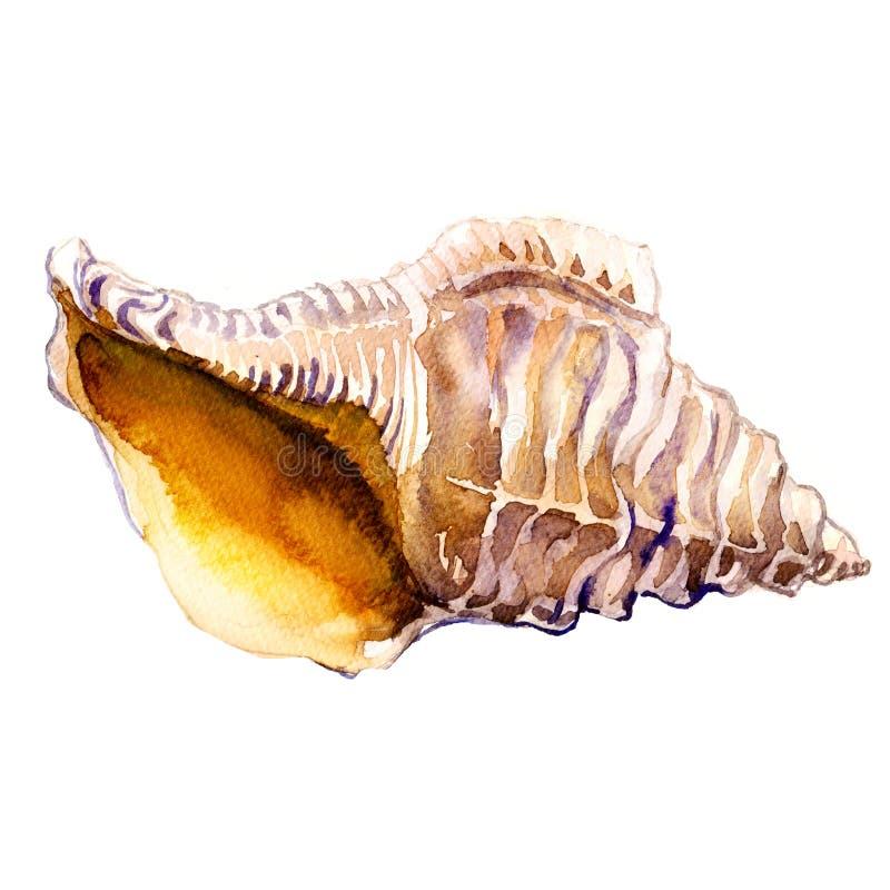 在白色隔绝的特写镜头的海洋贝壳 向量例证