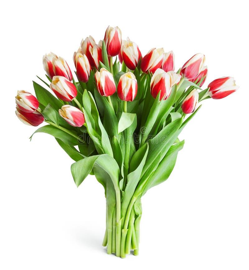 Download 在白色隔绝的红色郁金香大花束 库存照片. 图片 包括有 beautifuler, 庆祝, 花卉, 绿色, 郁金香 - 30329438