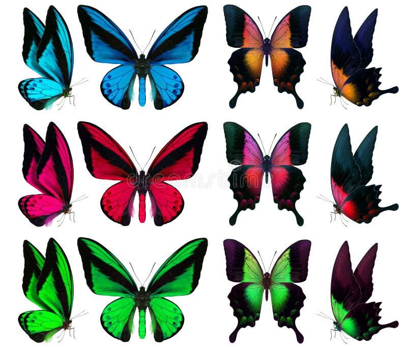 在白色隔绝的美丽的蝴蝶 库存图片