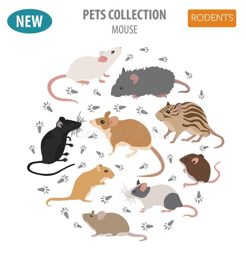 在白色隔绝的老鼠品种象集合平的样式 老鼠啮齿目动物 库存例证