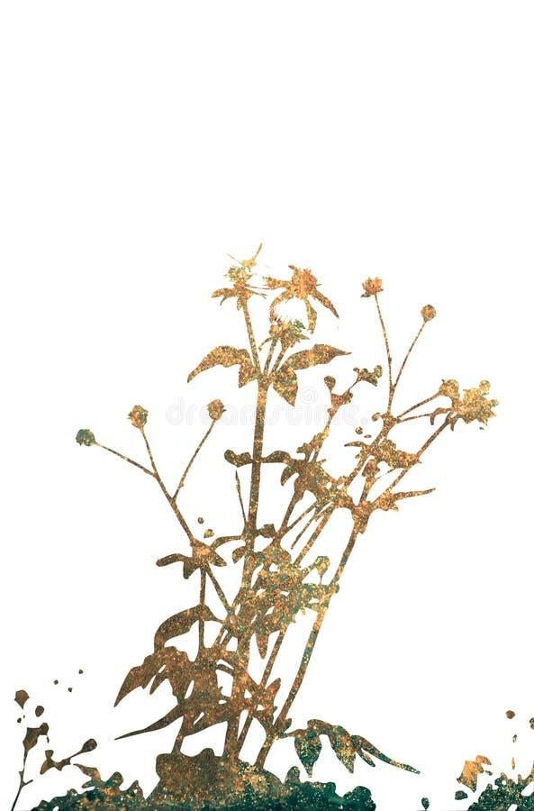 在白色隔绝的花卉样式纹理 免版税图库摄影
