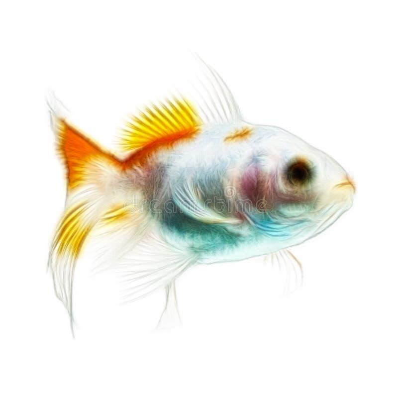 在白色隔绝的金鱼分数维 免版税库存照片