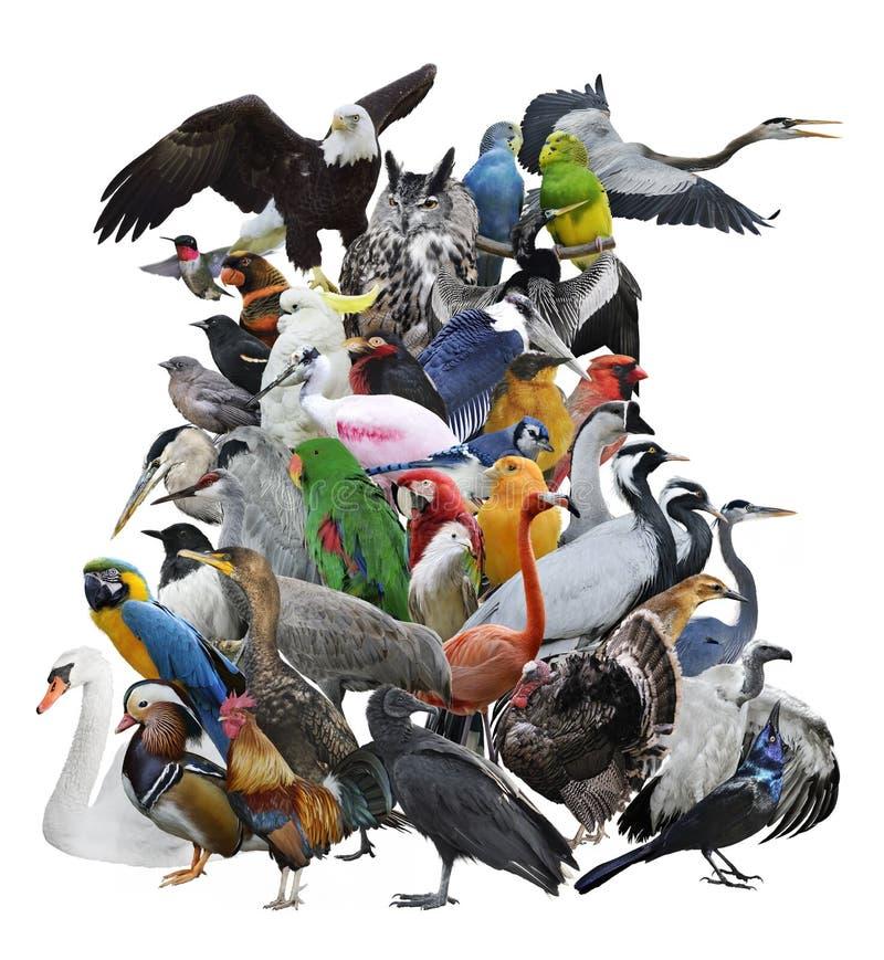 在白色隔绝的鸟收藏 库存图片