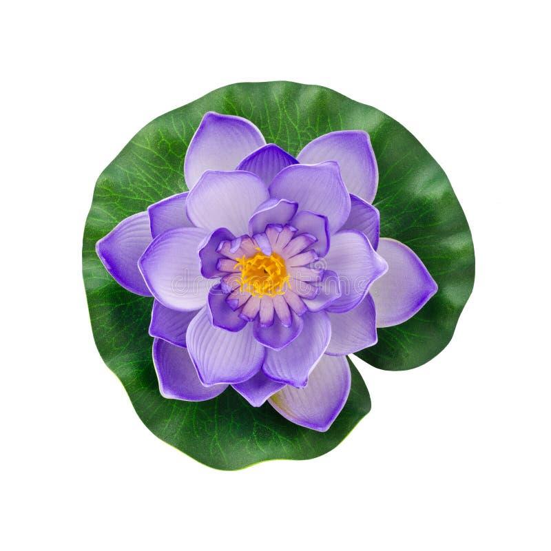 在白色隔绝的紫色人为荷花花 库存照片