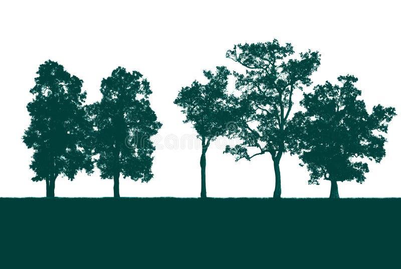 在白色隔绝的绿色树 库存照片