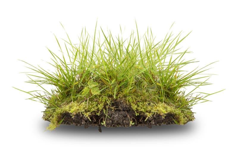 在白色隔绝的绿草和根 库存照片
