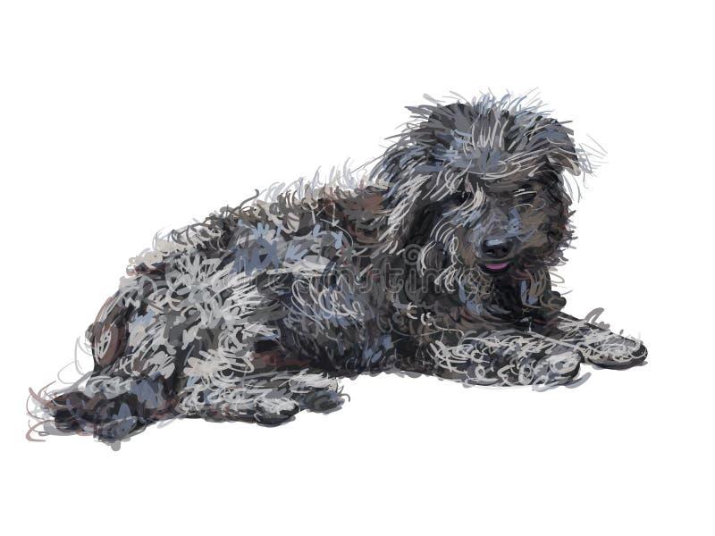 在白色隔绝的说谎的可怜的Shih慈济狗图画  皇族释放例证