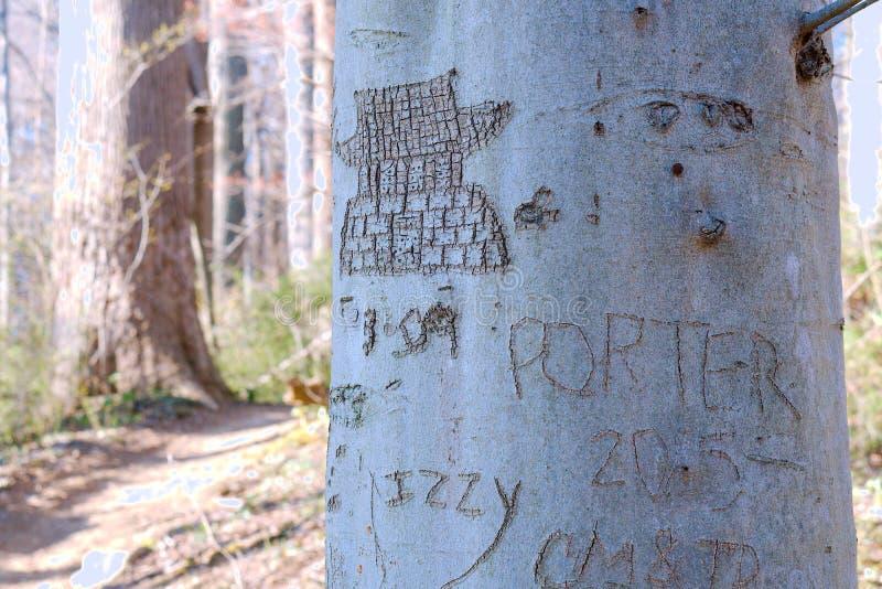 在白色黏土小河的被雕刻的树 免版税图库摄影