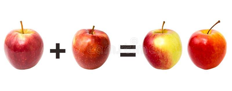 在白色,数学的红色苹果 库存照片