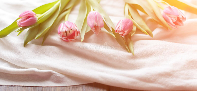 在白色织品的桃红色郁金香,点燃由落日的光芒 库存照片