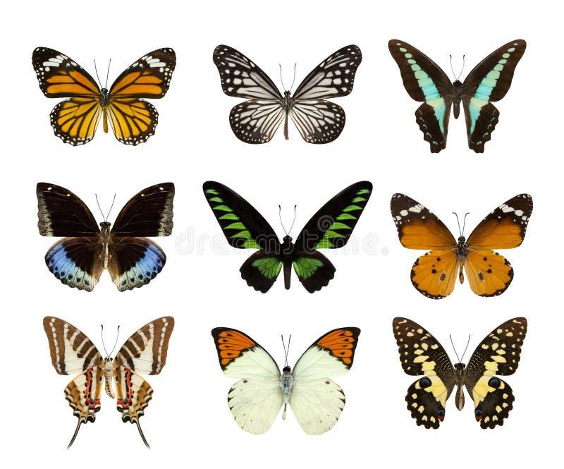 在白色蝴蝶隔绝的套 图库摄影