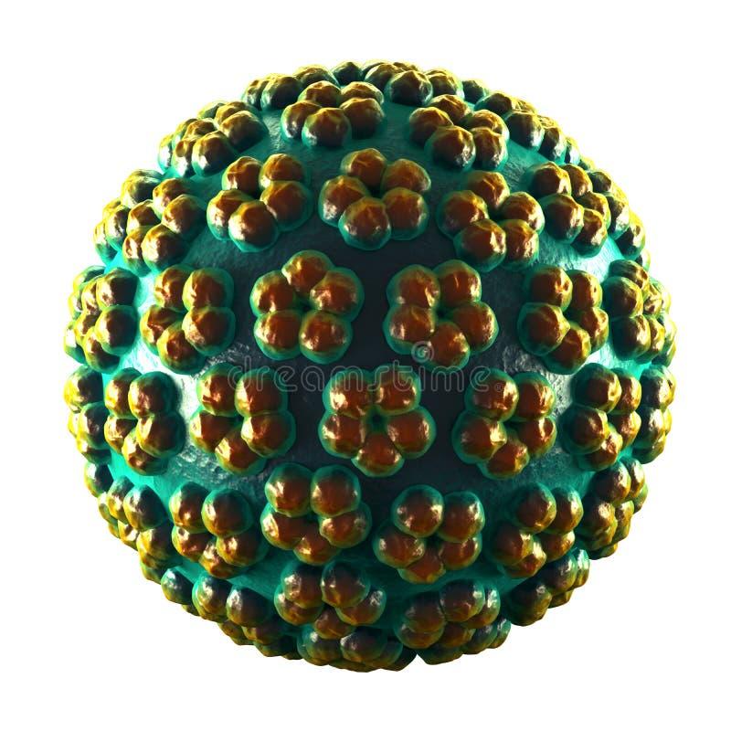 在白色- HPV -隔绝的刺瘤病毒 库存例证