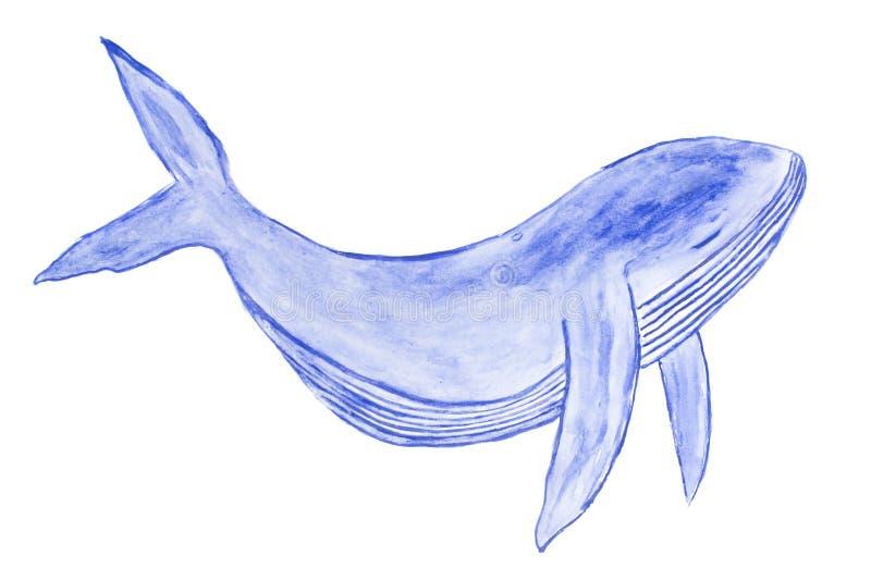 在白色ba隔绝的水彩逗人喜爱的蓝鲸艺术例证 向量例证