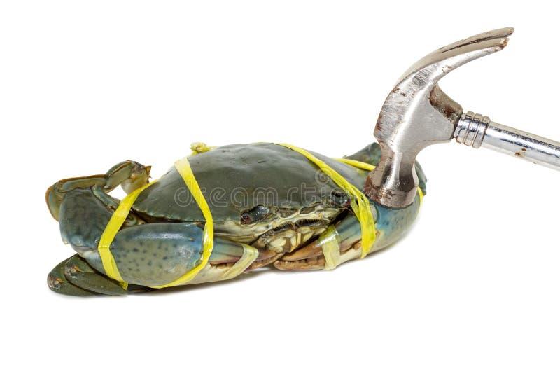 在白色backg栓与绳索黄色和锤击的未加工的黑螃蟹 免版税库存照片