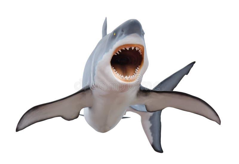 在白色isloated的剧烈大白鲨鱼 免版税库存照片