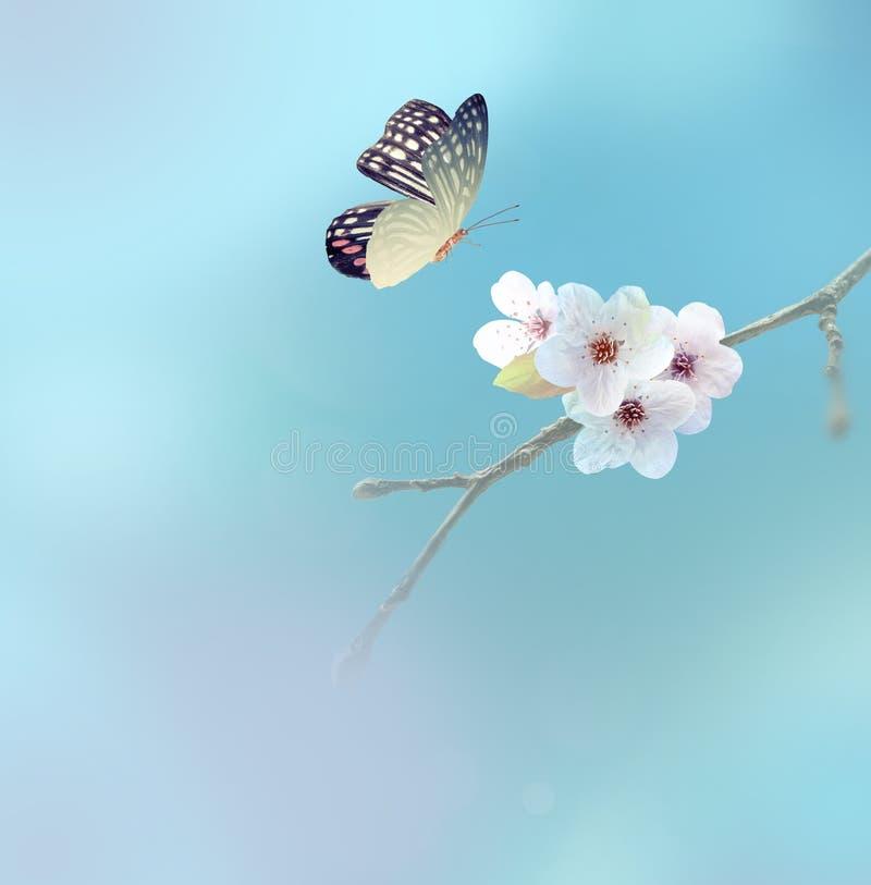 在白花,天空背景的美丽的蝴蝶 免版税库存图片