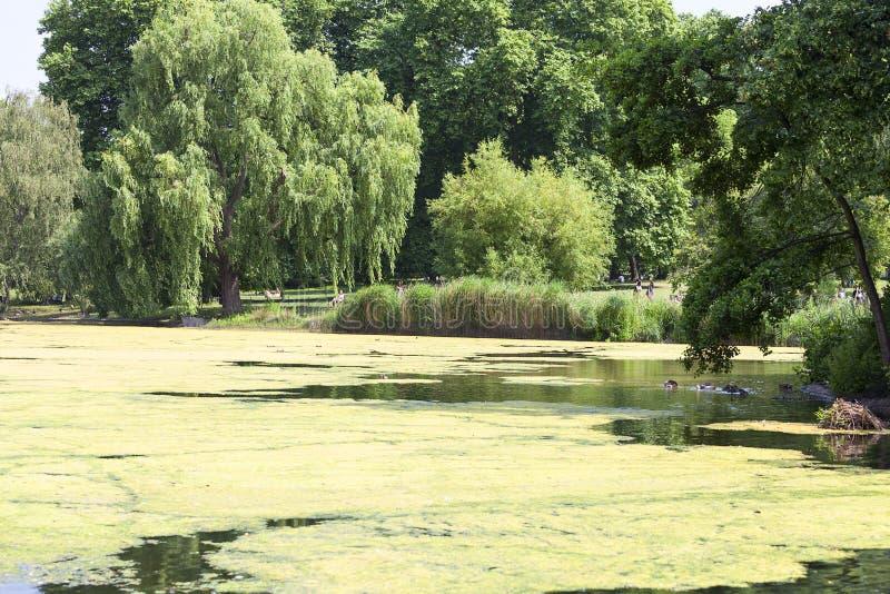 在白金汉宫,西敏市,伦敦,英国附近的圣詹姆斯公园 免版税库存照片