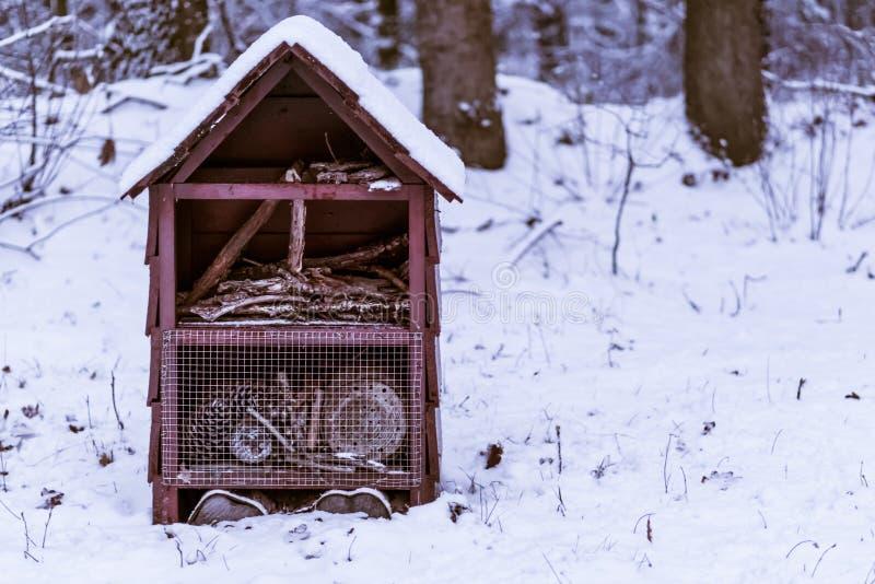 在白雪、庭院或者森林装饰盖的大昆虫房子,冬天季节背景 免版税库存图片