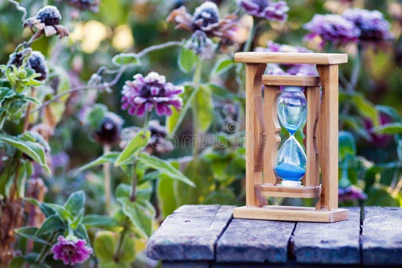 在百日菊属花背景的沙子时钟用霜_盖的 库存照片