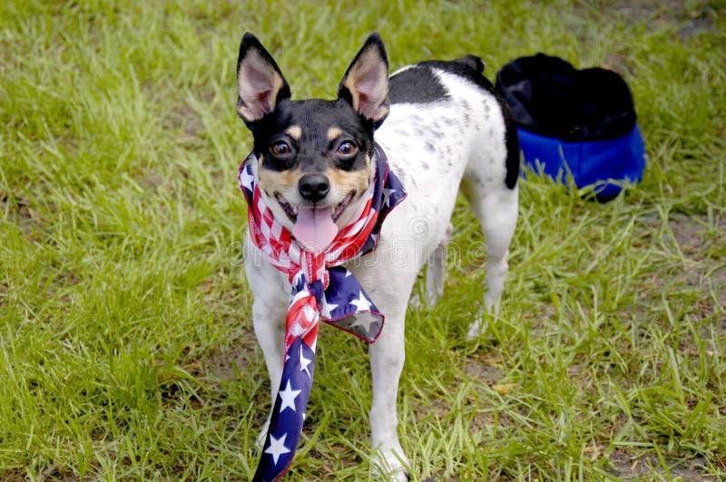 在的一条小狗7月4日与一块美国国旗班丹纳花绸的在给我们一张爱国画象 库存照片