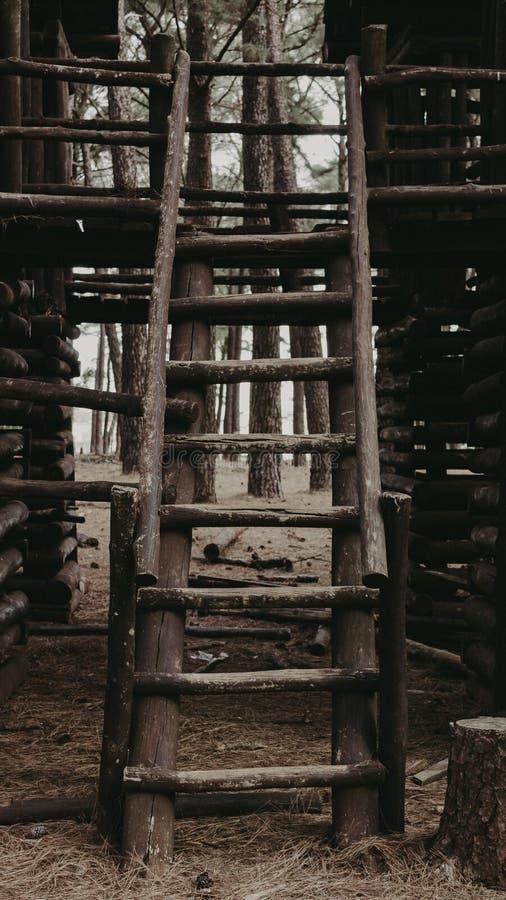 在的一架梯子森林 库存照片