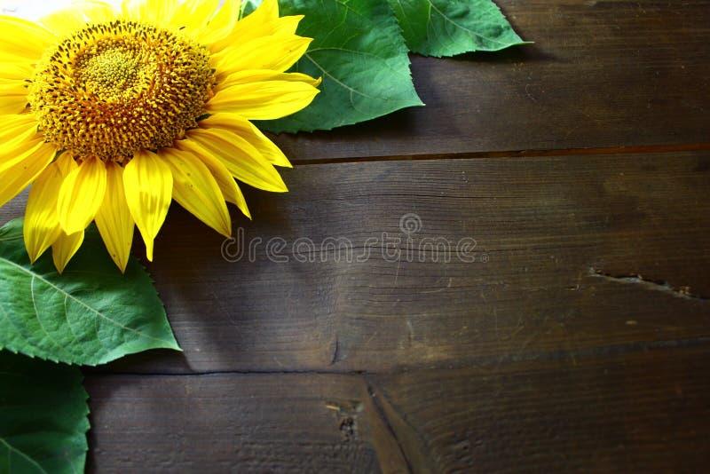 在的向日葵老木板 免版税库存图片