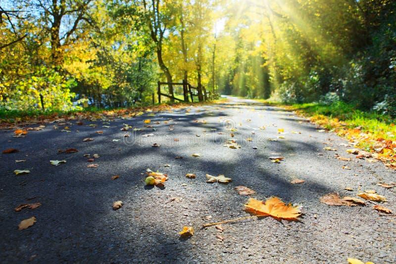 在的宏观射击在灰色沥青和阳光的五颜六色的枫叶 秋天在公园 免版税库存照片