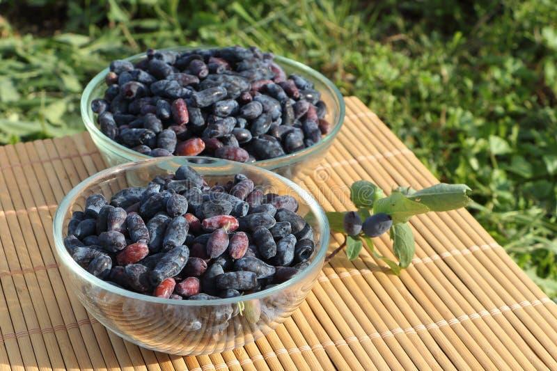 在的忍冬属植物莓果玻璃板 库存照片