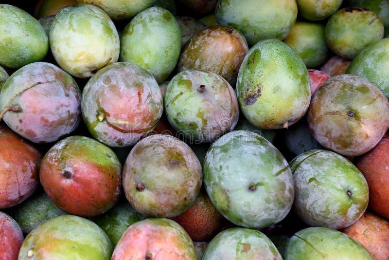 在的新鲜的被收获的成熟五颜六色的芒果的农夫在哥斯达黎加生产市场 免版税库存图片