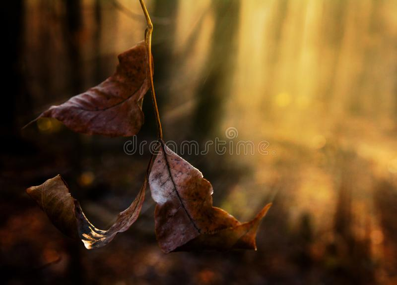 在的晚秋天forestFrozen在太阳的光芒的叶子 库存照片