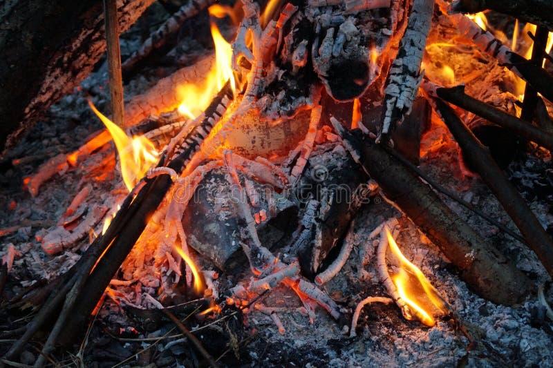 在的火在桦树的木神奇样式 库存照片