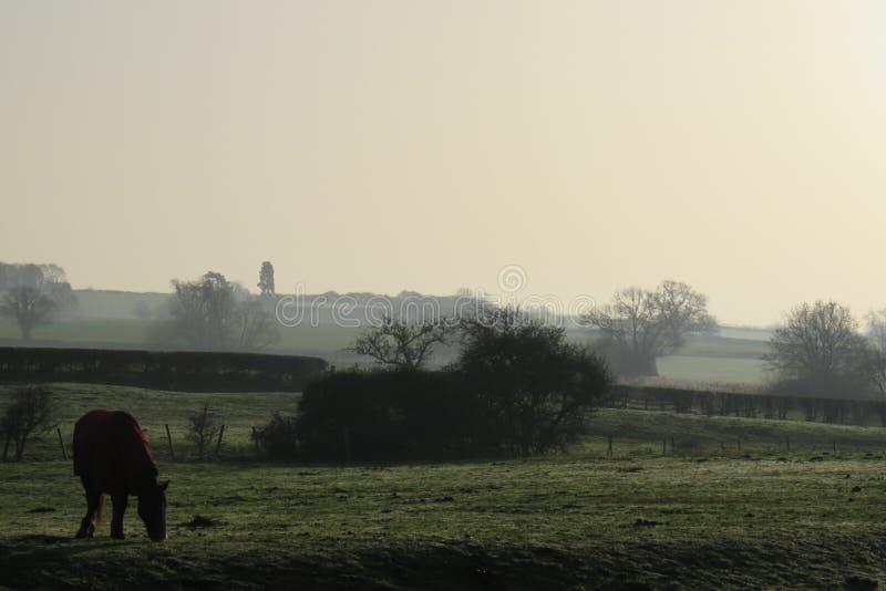 在的马有薄雾的冬天调遣穿外套 免版税库存照片