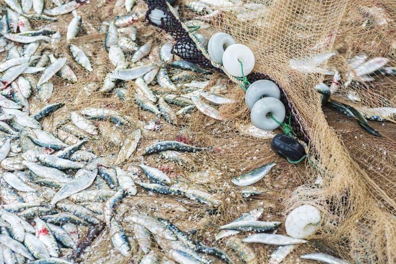 在的鱼捕鱼网 库存图片