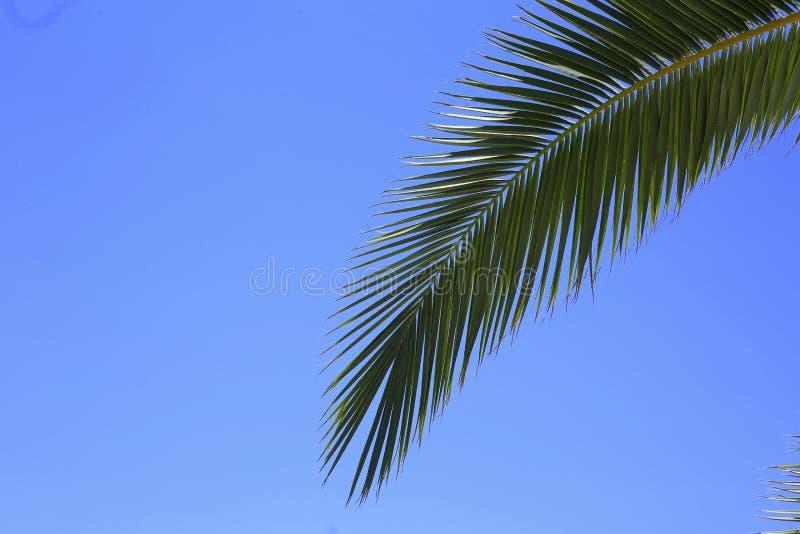 在的绿色棕榈叶 图库摄影