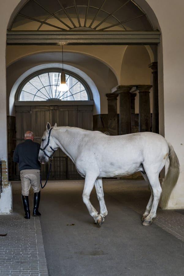 在皇家槽枥的马,哥本哈根,丹麦 免版税库存图片