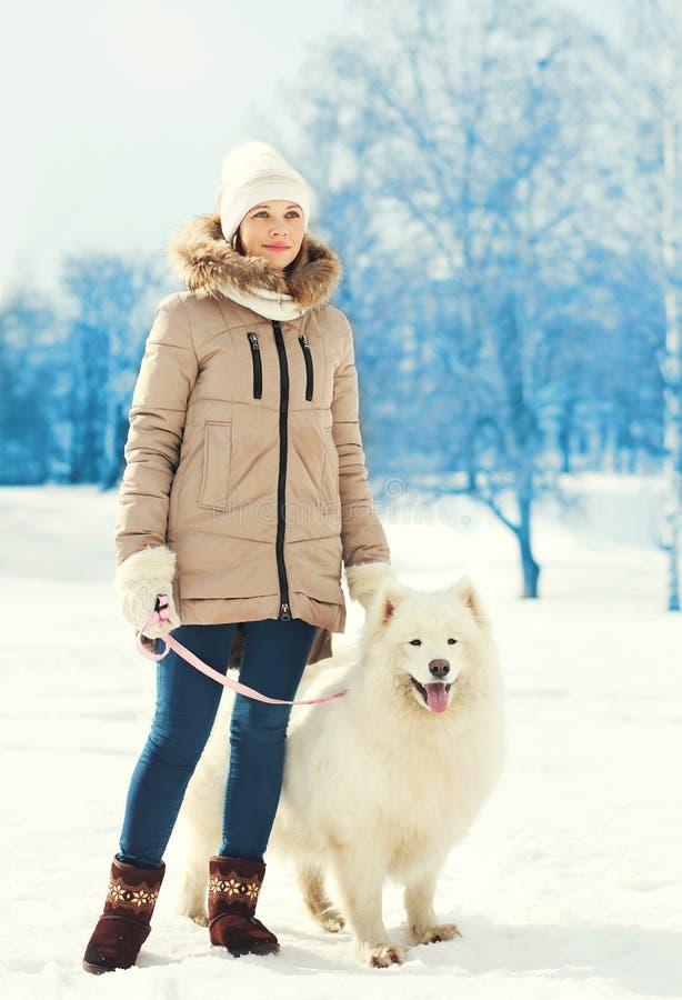在皮带走在冬天的妇女所有者和白色萨莫耶特人狗 免版税图库摄影